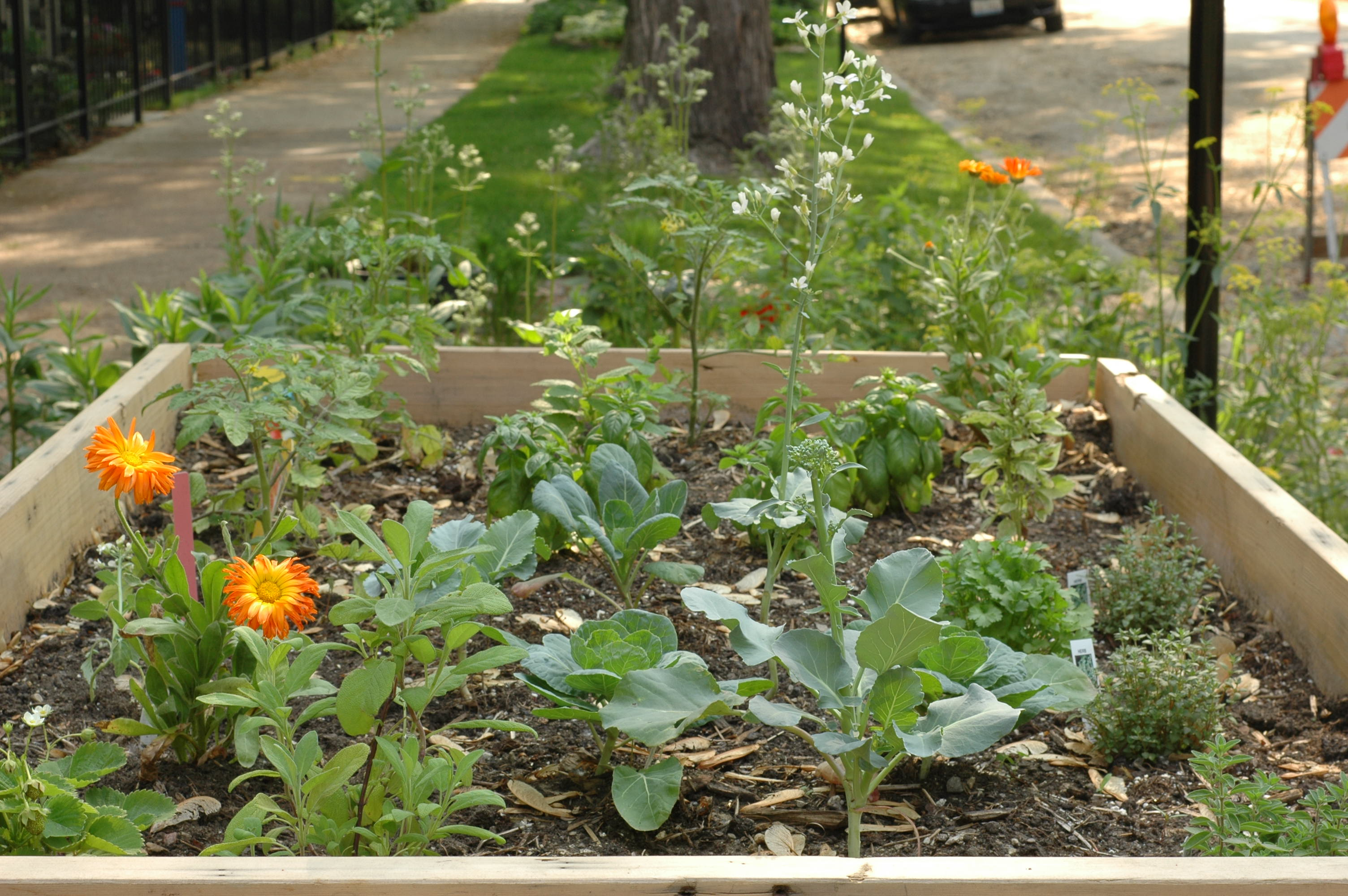 Native Plants And Companion Planting In The Moss Garden