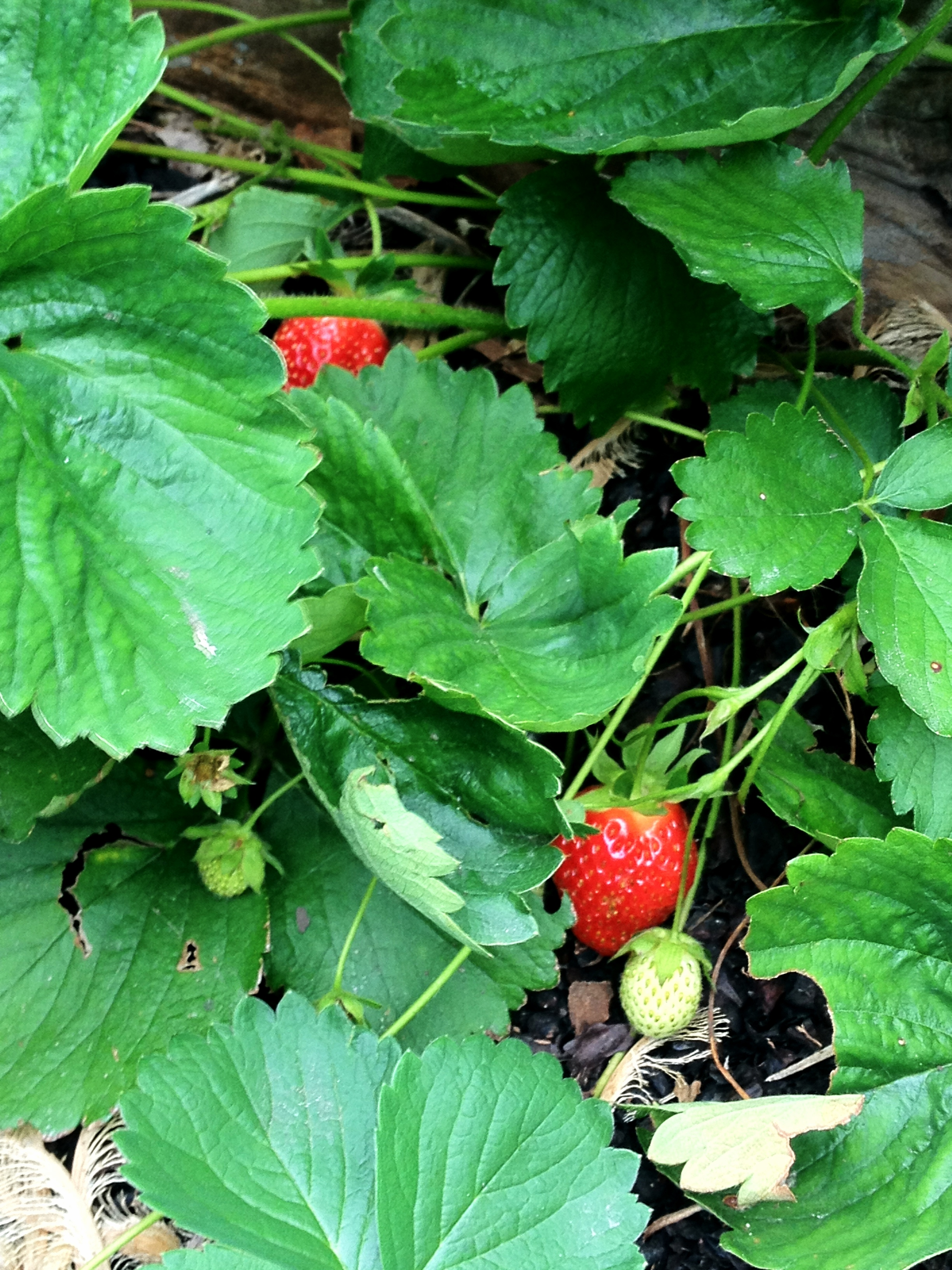 moss green architect strawberries chicago